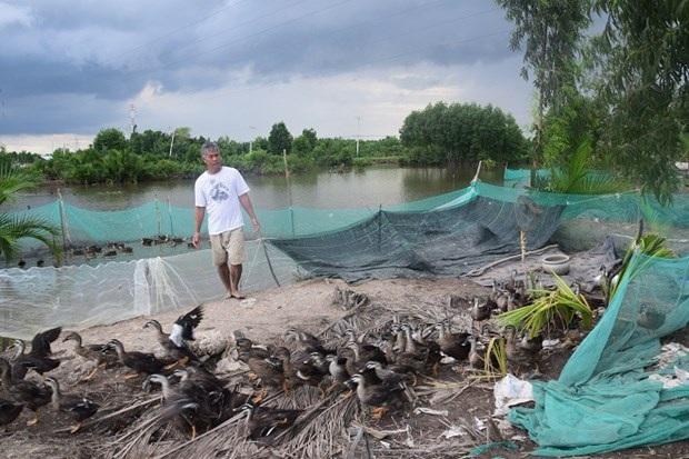 Trang trại vịt trời độc nhất ở Cần Giờ của anh Linh.