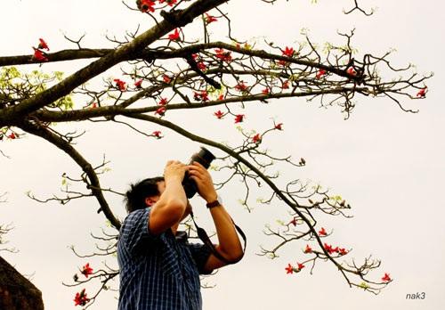 Yêu lắm mùa hoa Gạo tháng Ba - 1