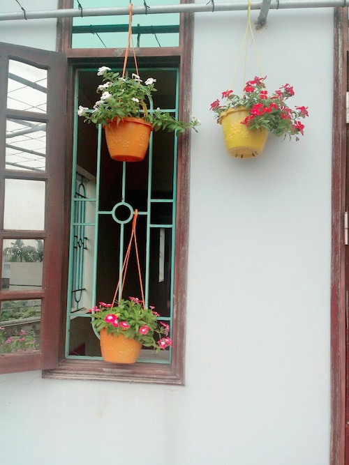 Những chậu hoa rủ bên khung cửa sổ.