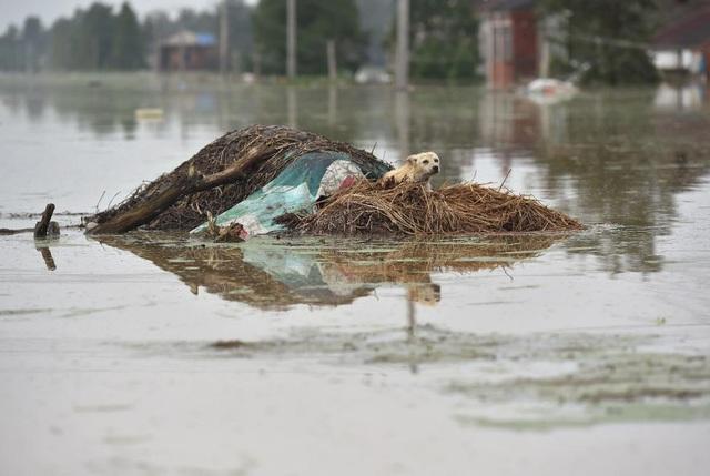 Hồi đầu năm nay, giới chức Trung Quốc đã cảnh báo các đợt lũ kỷ lục do ảnh hưởng của hiện tượng El Nino. (Ảnh: Reuters)