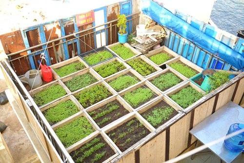 Vườn thanh niên ở Trường Sa và Nhà giàn DK1 - 10