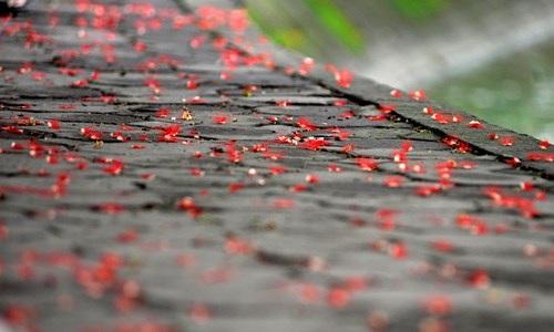 Lộc vừng Hồ Gươm rắc mưa hoa chờ gót son xuống phố - 10