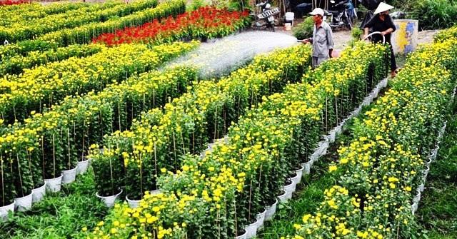 Ảnh: Cánh đồng hoa đẹp như tranh vẽ giữa Sài Gòn - 11