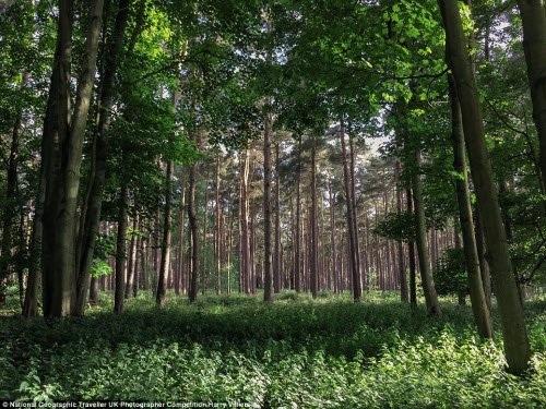 Khung cảnh rừng Thetford ở Norfolk, Anh. Ảnh: Harry Villiers