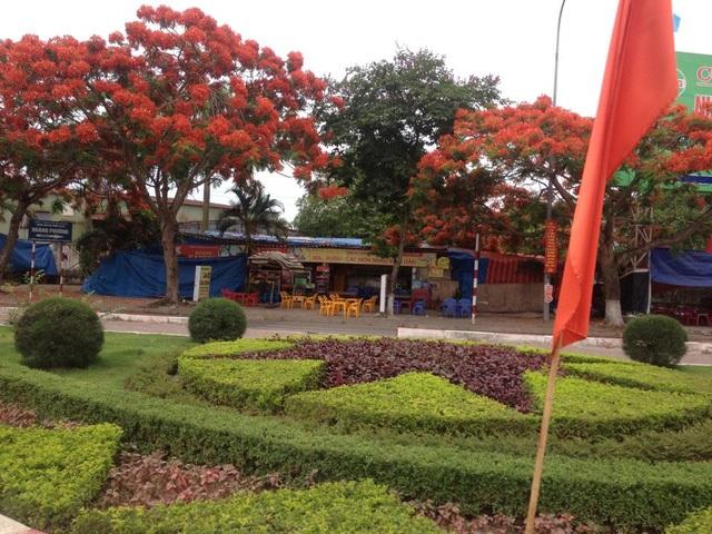 Ngắm vẻ đẹp nao lòng của đường hoa phượng dài nhất Việt Nam - 12