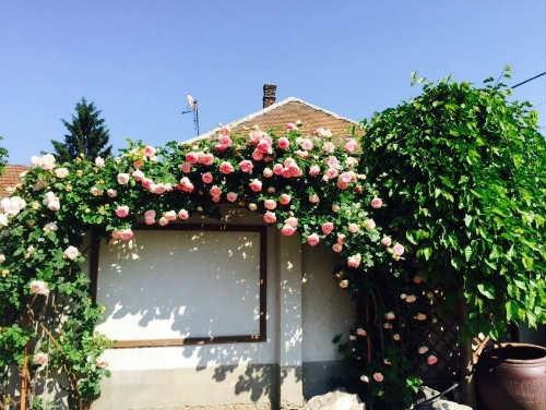 Khung cảnh đẹp như tranh của tại khu vườn nhỏ của chị Thảo