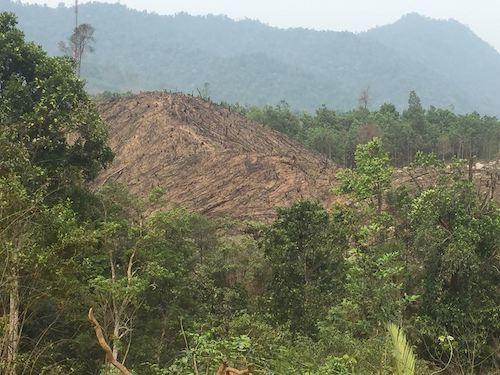 Hiện trạng một khoảnh rừng ngay sát khu thi công dự án cáp treo Yên Tử tại huyện Sơn Động.