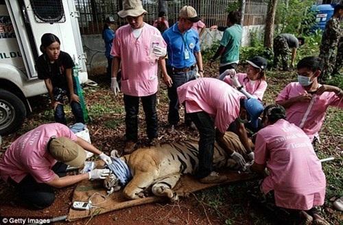 Những hình ảnh không thể tin nổi trong ngôi đền Hổ nổi tiếng ở Thái Lan - 14