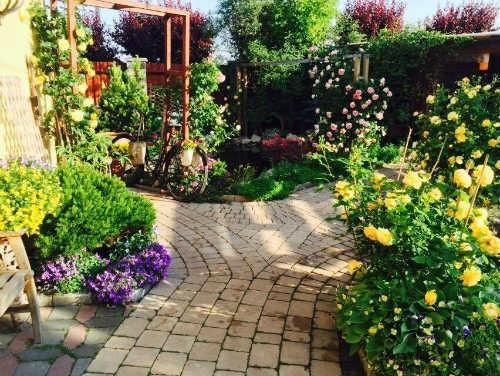 Khu vườn có hơn 30 loài hoa hồng...