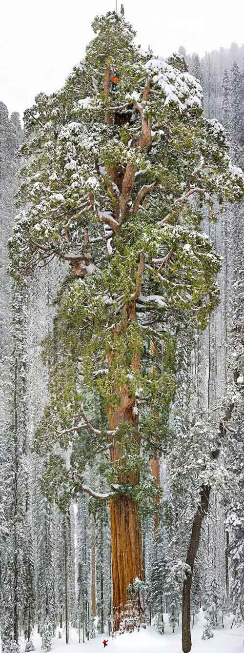 Vẻ lộng lẫy của 16 cây đẹp nhất thế giới - 18