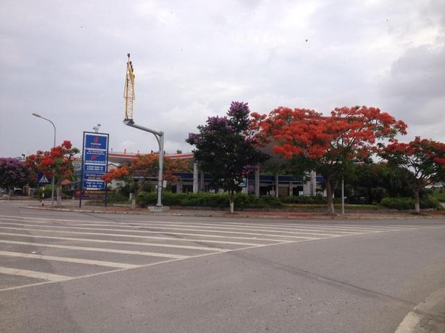 Ngắm vẻ đẹp nao lòng của đường hoa phượng dài nhất Việt Nam - 18