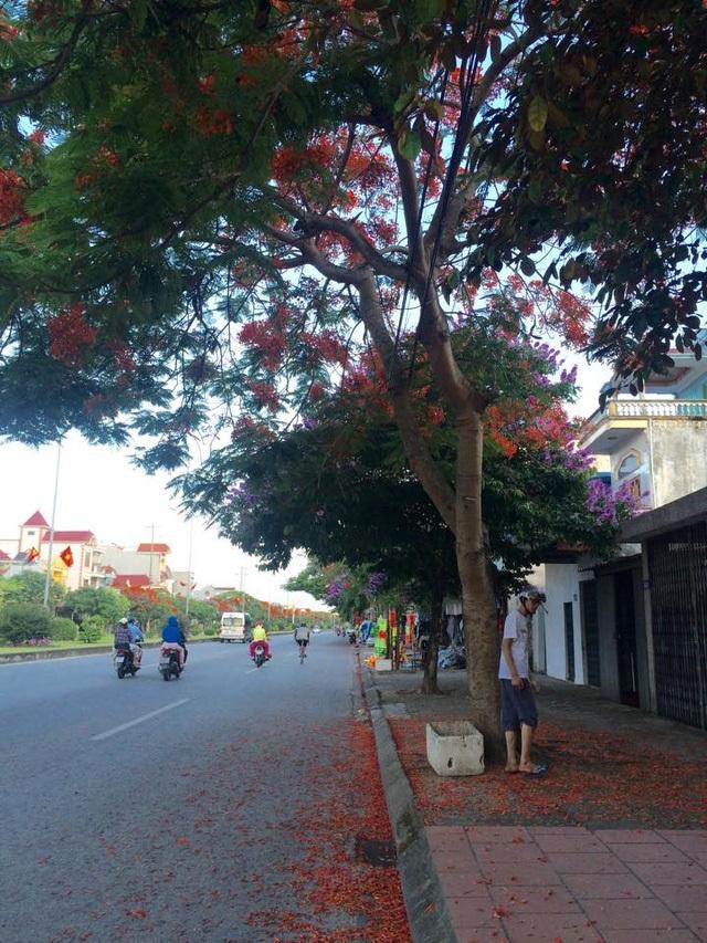 Ngắm vẻ đẹp nao lòng của đường hoa phượng dài nhất Việt Nam - 19