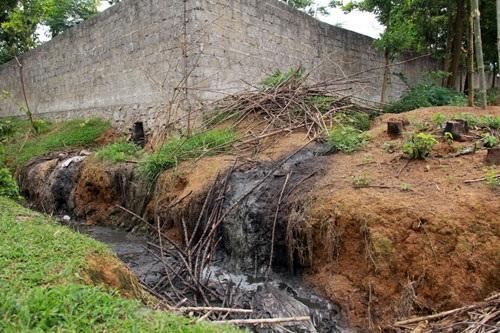 Một điểm xả thải trực tiếp ra môi trường từ trang trại lợn nuôi gia công cho C.P của ông Nguyễn Ngọc Sáng.  Ảnh: Việt Tùng
