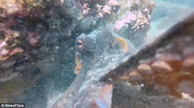 Người thợ lặn phải đánh vật với đám xúc tua để đòi lại máy quay.