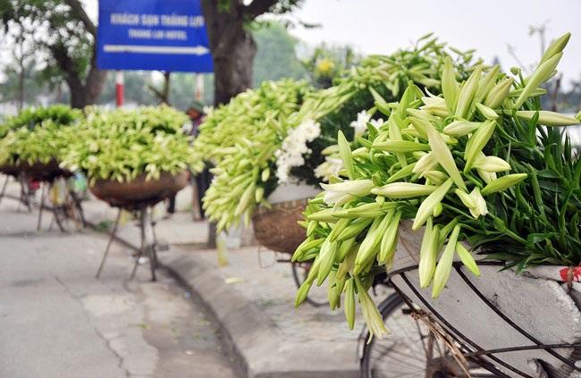 5 loài hoa khiến Hà Nội thơ hơn giữa mùa hạ cháy - 2