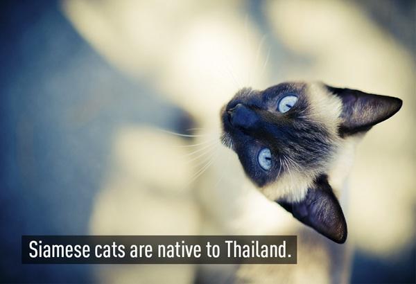 Những điều thú vị về đất nước Thái Lan - 2