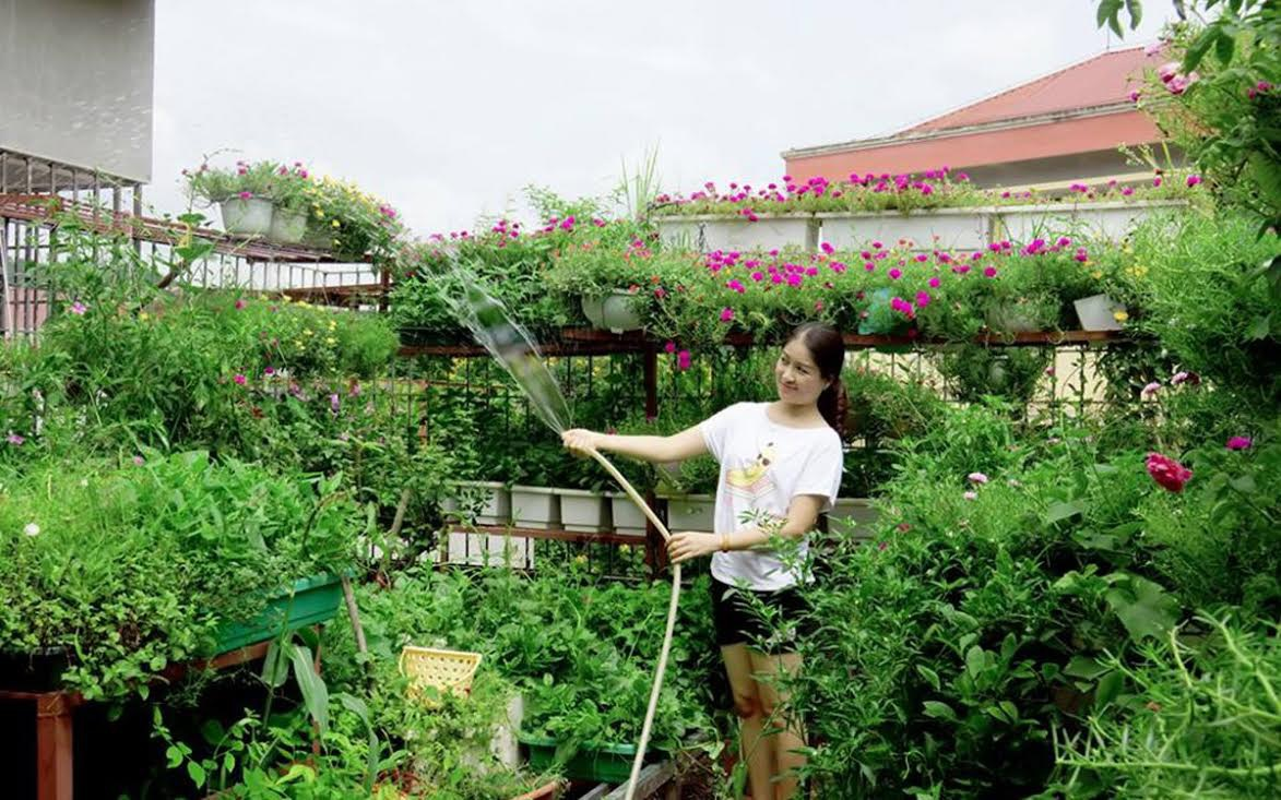 Để vườn rau sân trên sân thượng không bị chết cháy, nhiều người phải trốn việc cơ quan để về nhà tưới rau vào mỗi buổi trưa (ảnh minh họa)