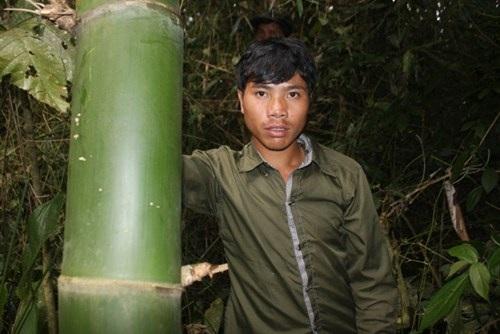 Một trong ba bụi tre khổng lồ ở cánh rừng ở núi Ngọc Lan được dân Long Riêu 3 bảo vệ qua bao đời. Tre ở đây chi chít gai nên để chặt một cây tre không hề dễ dàng.  Mỗi đốt tre dài 40cm nhưng chu vi thân lên đến 60 - 70cm.