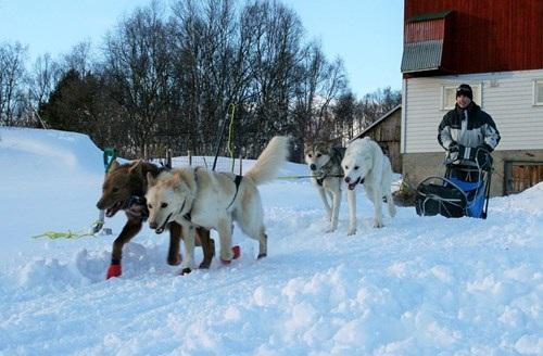 Bán nhà lên sống ở... Bắc Cực vì quá yêu chó - 2