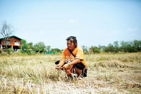Hầu hết những cánh đồng trồng lúa miền Trung và Bắc Thái Lan đã khô nẻ vì hạn hán.