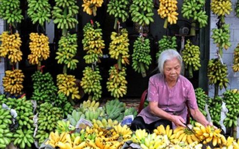 Chuối ngự - đặc sản của Hà Nam, Nam Định