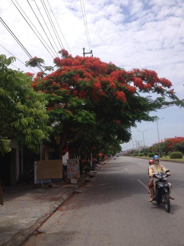 Ngắm vẻ đẹp nao lòng của đường hoa phượng dài nhất Việt Nam - 2