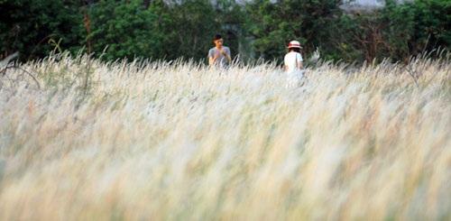 Cánh đồng cỏ lau đẹp như tranh giữa Sài Gòn - 11