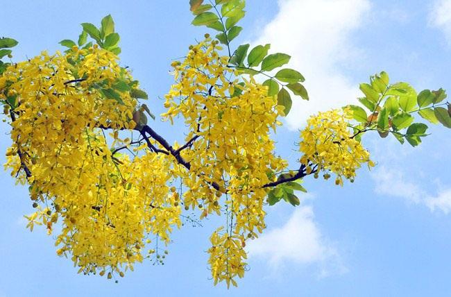 5 loài hoa khiến Hà Nội thơ hơn giữa mùa hạ cháy - 12