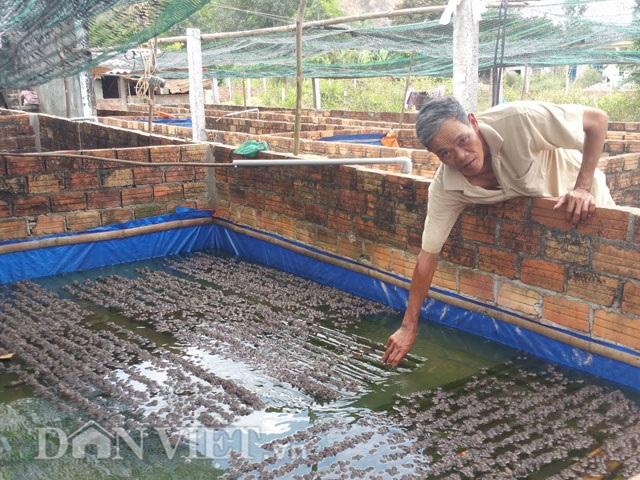 Với ếch nhỏ được ông Tại cho nước nuôi 20cm và bỏ sạp để ếch nằm trên.