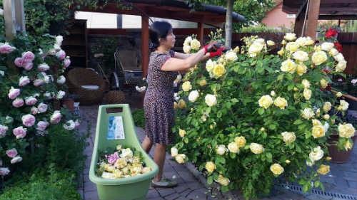 Chị Thảo dành cả thời gian trang điểm vào việc chăm sóc hoa