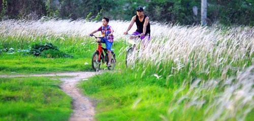 Cánh đồng cỏ lau đẹp như tranh giữa Sài Gòn - 3