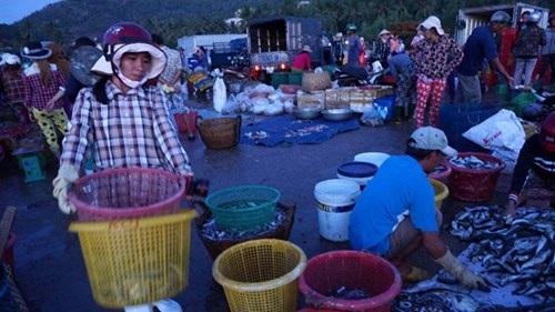 Chưa sáng rõ mặt người, trên chợ đã tấp nập người vận chuyển, phân loại hải sản, các xe đông lạnh chờ nhận tôm, cá, cua, ghẹ