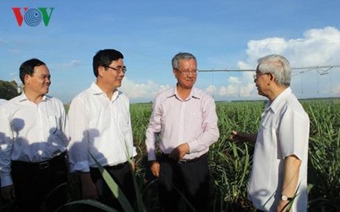 Tổng Bí thư thăm cánh đồng mía ở nông trường Ninh Điền