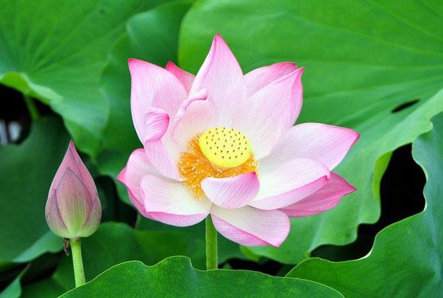 5 loài hoa khiến Hà Nội thơ hơn giữa mùa hạ cháy - 15