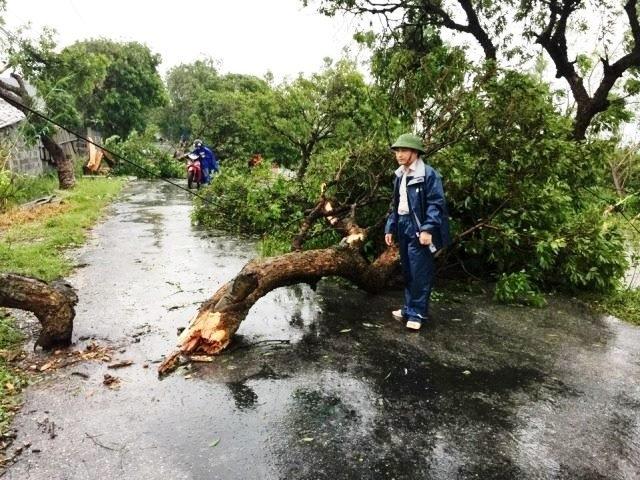 Cây cối đổ ngổn ngang ở huyện Hưng Hà