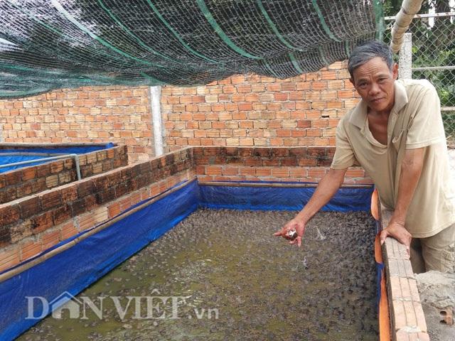 Ông Tại đang giới thiệu bể nuôi ếch của gia đình.