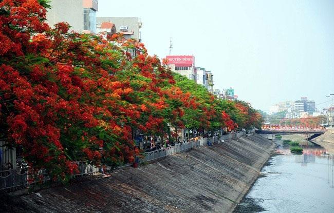5 loài hoa khiến Hà Nội thơ hơn giữa mùa hạ cháy - 4