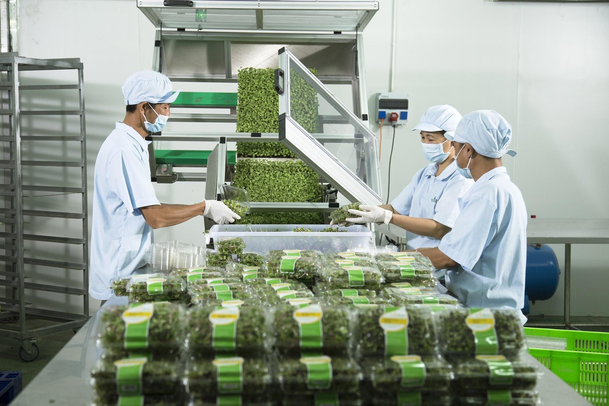 Công ty VinEco cho biết, tất cả các sản phẩm sẽ được phân phối độc quyền trong hệ thống siêu thị Vinmart, Vinmart+ trên toàn miền Bắc.
