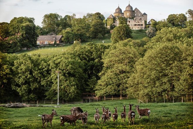 Những con hươu ở Kassel. (Nguồn: NatGeo)