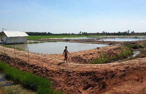 Nhiều ao nuôi cá tự phát tại Thạnh Hóa, Long An. Ảnh: H.NAM