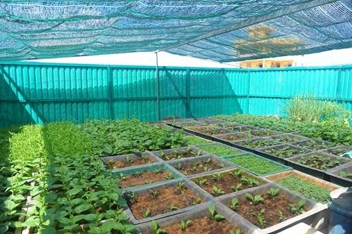 Vườn thanh niên ở Trường Sa và Nhà giàn DK1 - 4
