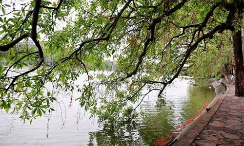Lộc vừng Hồ Gươm rắc mưa hoa chờ gót son xuống phố - 4
