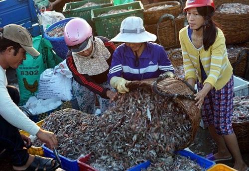 Phần lớn trong số những người chuyển hải sản lên chợ, phân loại và chuyển chúng tới xe của thương lái là phụ nữ