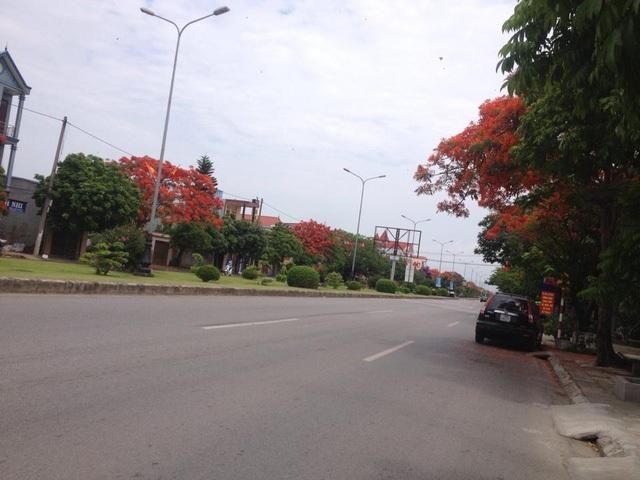 Ngắm vẻ đẹp nao lòng của đường hoa phượng dài nhất Việt Nam - 5