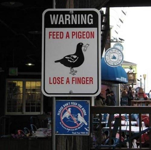 Cho bồ câu ăn, có thể mất ngón tay.