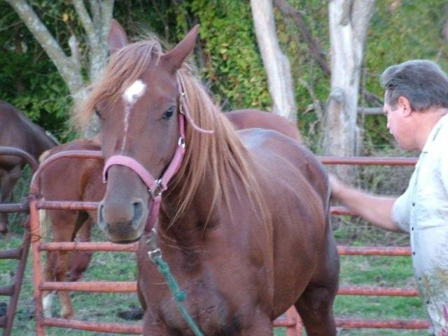 Sở thích của Langan là nuôi ngựa.