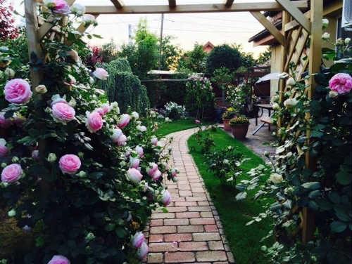 Tình yêu thiên nhiên, cây cỏ đã cho chị nhiều hơn là một vườn hoa