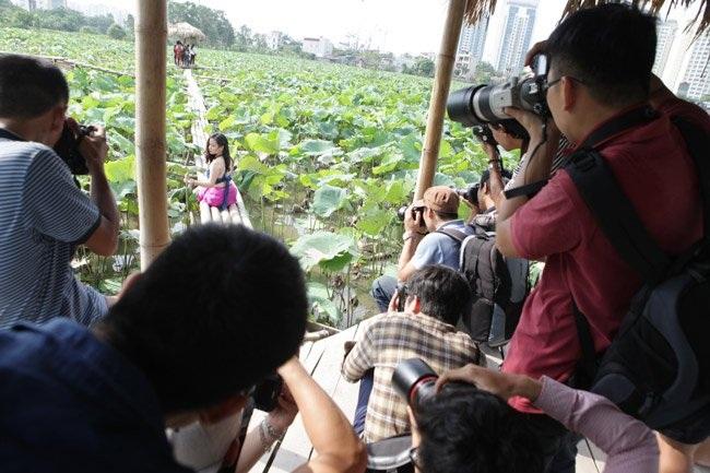 """Thiếu nữ Hà thành """"lăn lê bò toài"""" chụp ảnh cùng sen - 7"""