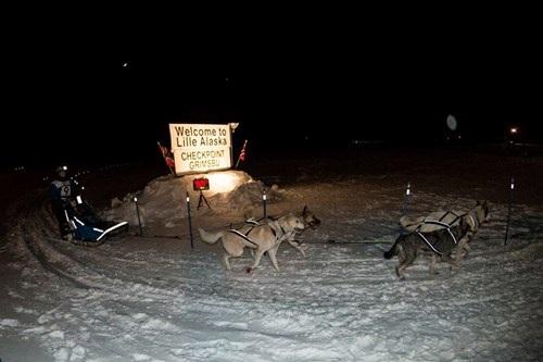 Bán nhà lên sống ở... Bắc Cực vì quá yêu chó - 7