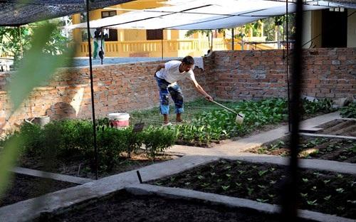 Vườn thanh niên ở Trường Sa và Nhà giàn DK1 - 7